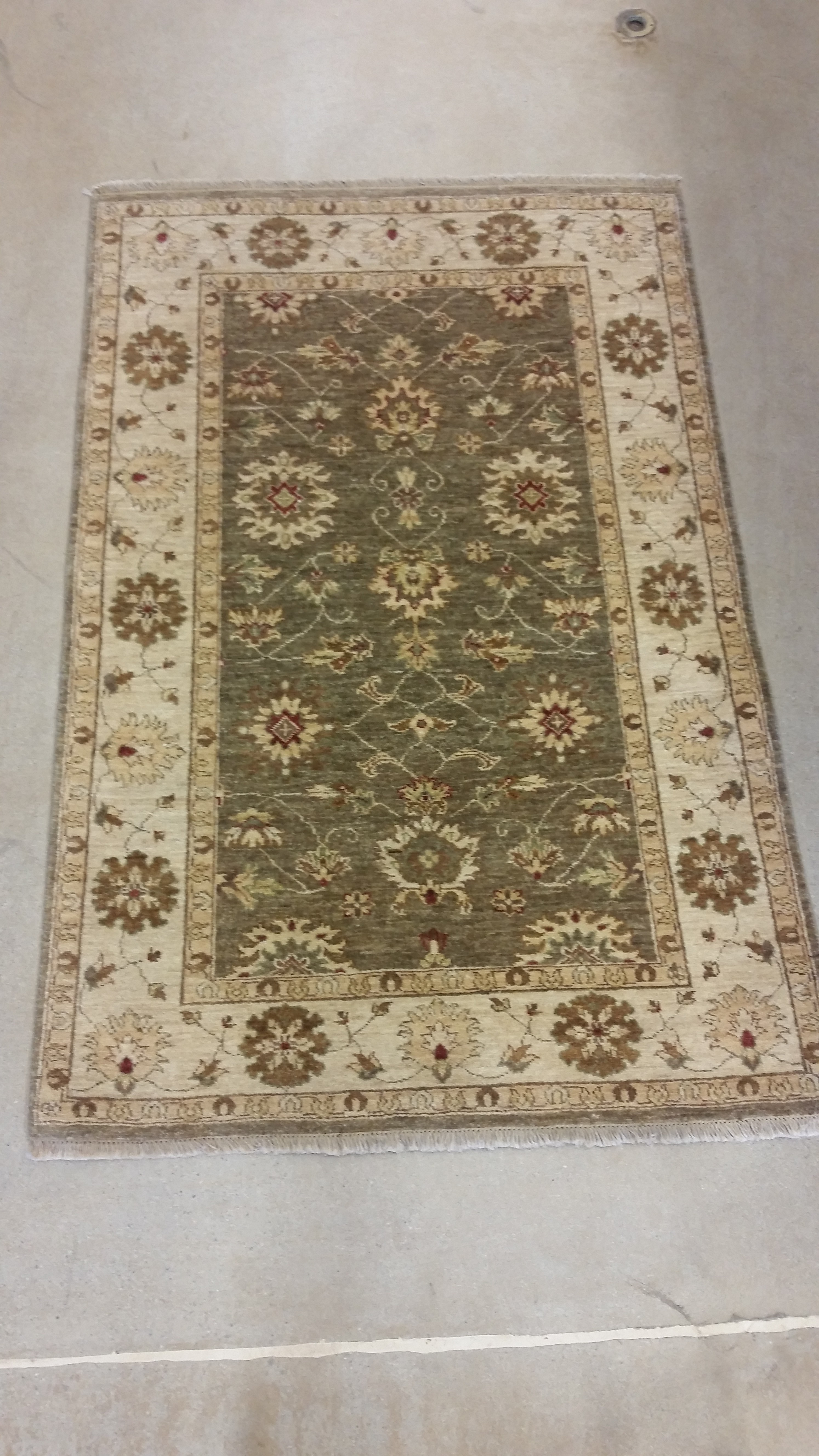 Area Rug Olive Green Ivory Trim Pv Rugs